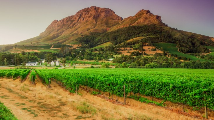 Stellenbosch is known for its rich culture, history and its wine routes.