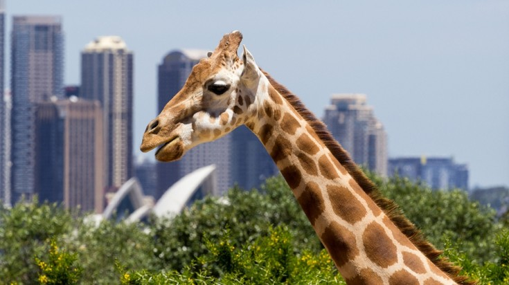 Taronga Zoo is a must go to place in Sydney
