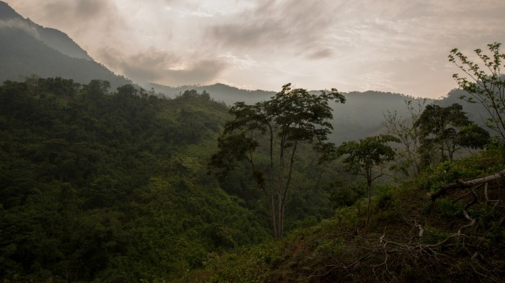 A view of the forest on the Lost City trek in Colombia