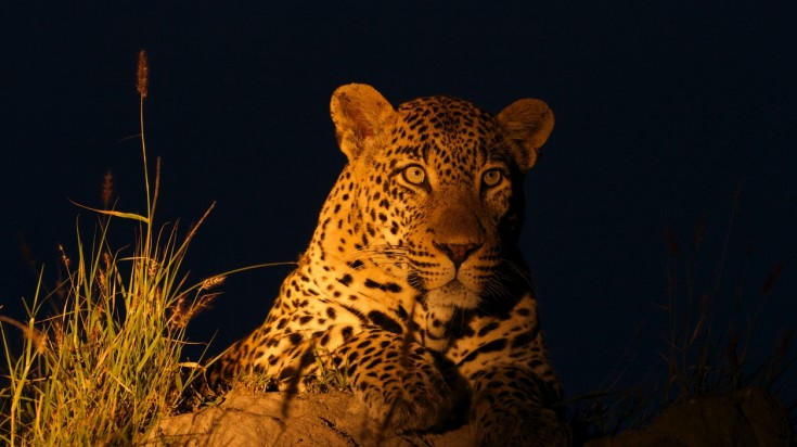 Leopard sightings in a Lake Manyara Safari