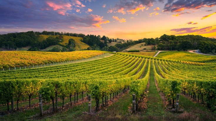 Things to do in Adelaide in Barossa valley