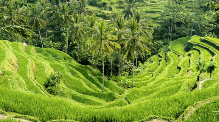 Visiting the Tegallalang Rice Terraces is a top thing to do in Bali
