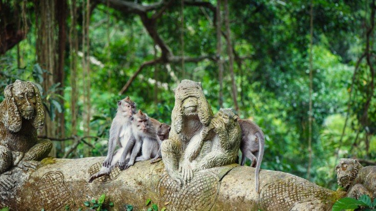 Visiting the Sacred Monkey Forest is a top thing to do in Bali