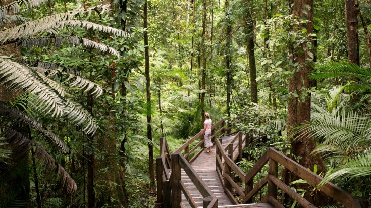 Things to do in Cairns, Daintree Rainforest