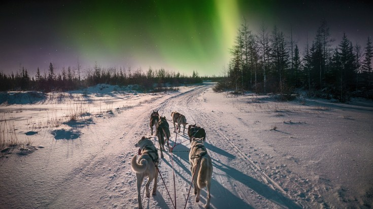 Witness the Northern lights in Canada as you are pulled on a husky-sledge