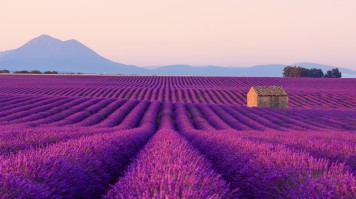 The Lavender Fields in Provence is one of the best places to go in France