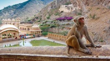 Monkey Temple in Jaipur