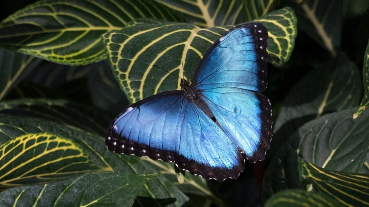 Things to do in San Jose butterfly museum