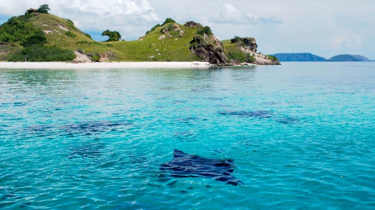 Manta Rays are popular attraction while visiting Komodo Island