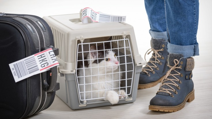 Traveling with pets by air