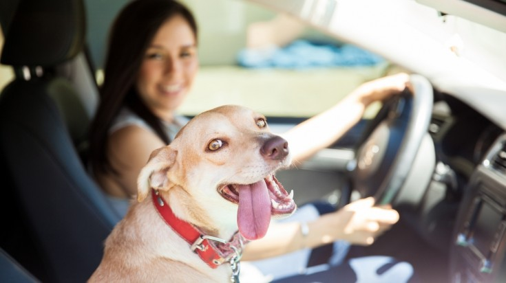 Traveling with pets by car