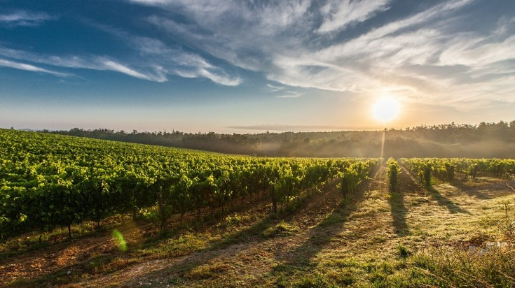 Best wineries in Tuscany comes from this far stretched vineyards