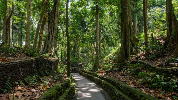 The Money Forest is a great place to go in Bali for a nature escape.