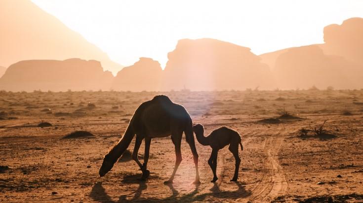 Wadi Rum is a popular desert destination of jordan.