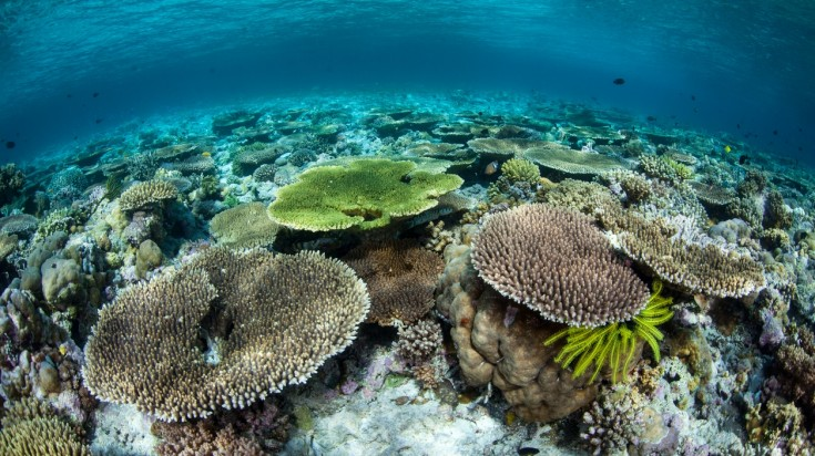 Wakatobi island in Indonesia is a have for scuba divers