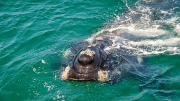 Whale watching boat tour in hermanus