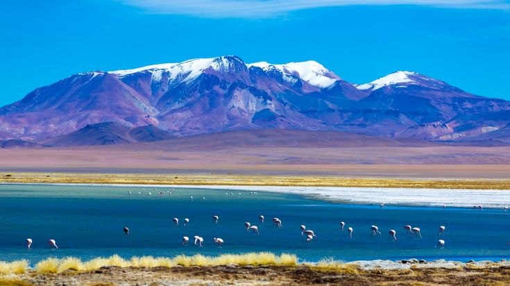 Wild flamingos can be found plenty in the Atacama desert