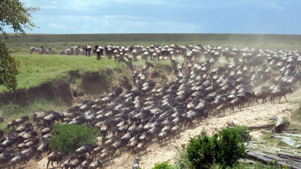 Top Best Things To Do In Tanzania Bookmundi - 9 things to see and do in serengeti national park