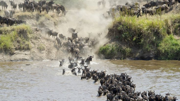 Wildebeest Migration involves crossing rivers