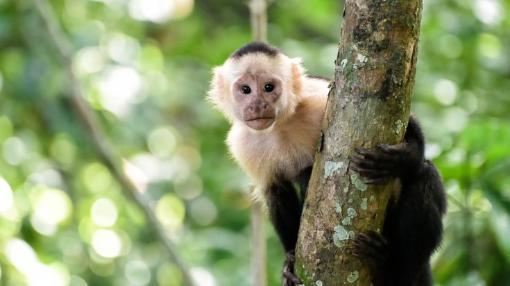Wildlife in Costa Rica is abundant thanks to its lush, green vegetation