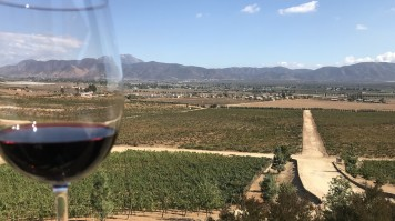 A glass of wine against the vineyards in Ensenada, Mexico