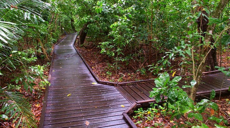 Wooden path for eco-walk in Green Island
