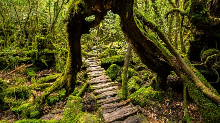 Yakushima, a sub tropical island in Japan covered with cedar forest is a top off the beaten path in Japan.