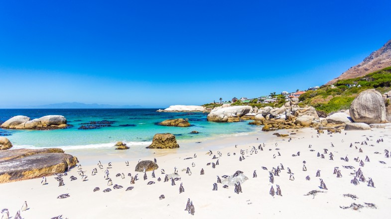 Boulders beach are Cape Town's famous penguin colony