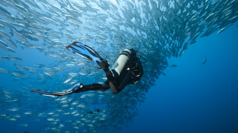 Find a list of the best dive sites in the world.