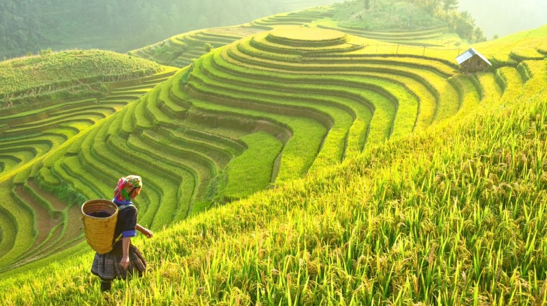 Asia has some of the best places to travel to. From green rice fields to bustling modern cities, Asia has it all.