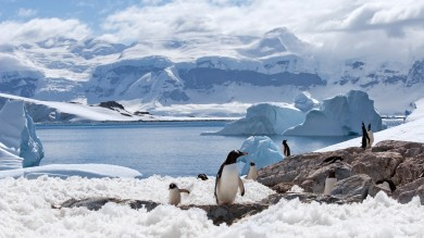 A summer visit to Antarctica offers opportunities to see large icebergs and a plethora of wildlife, including whales and breeding elephant seals.