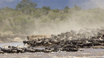 Wildebeest migration in the Serengeti National Park.
