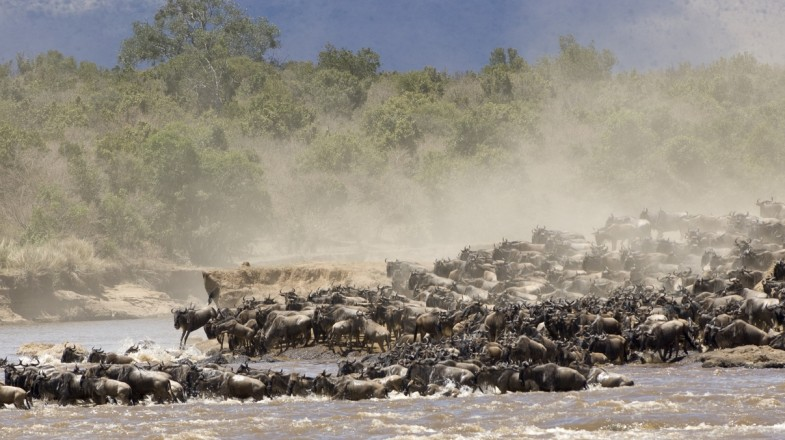 Wildebeest migration in the Serengeti National Park.