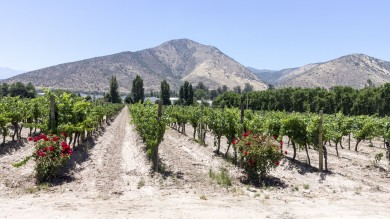 Maipo Valley wine region is the shortest drive away and offers a host of delectable Chilean wine, meaning it is a perfect getaway for a short  day trip