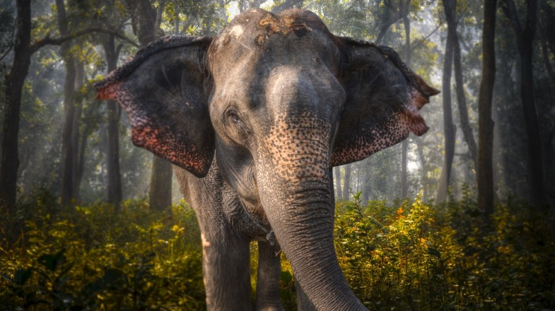 Book a trip to Chitwan National Park to check out elephants
