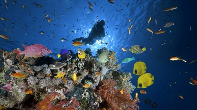 Scuba diving in Australia among the corals in the Great Barrier Reef