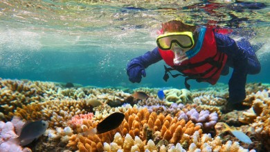 The Great Barrier Reef is the world's largest collection of living organisms.