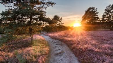 Heidschnuckenweg is called the most beautiful hiking trail in Germany