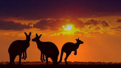 The Australian outback maybe a harsh, dry land but it is nothing short of exquisite filled with exotic landscapes, starry night skies and native wildlife.