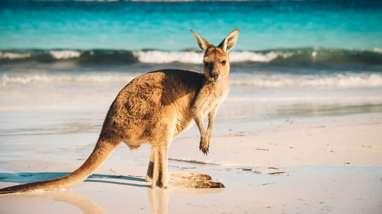 Kangaroo Island consists of untouched wildlife and pristine shores that defines a luxury holiday.