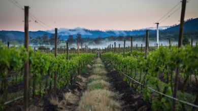 Located just an hour drive away from Santiago, Casablanca valley is one of Chile's best wine regions.