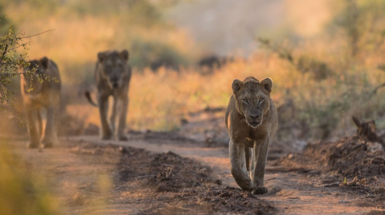 South Africa's Kruger National Park is one of the world's greatest safari destinations.