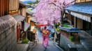 A geisha strolls the traditional narrow streets of Kyoto, with a cherry tree blossoming nearby.
