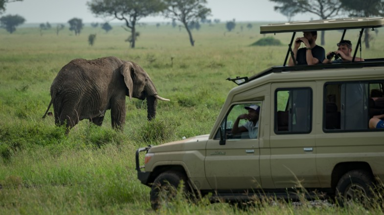 The Masai Mara plains with the great wildlife