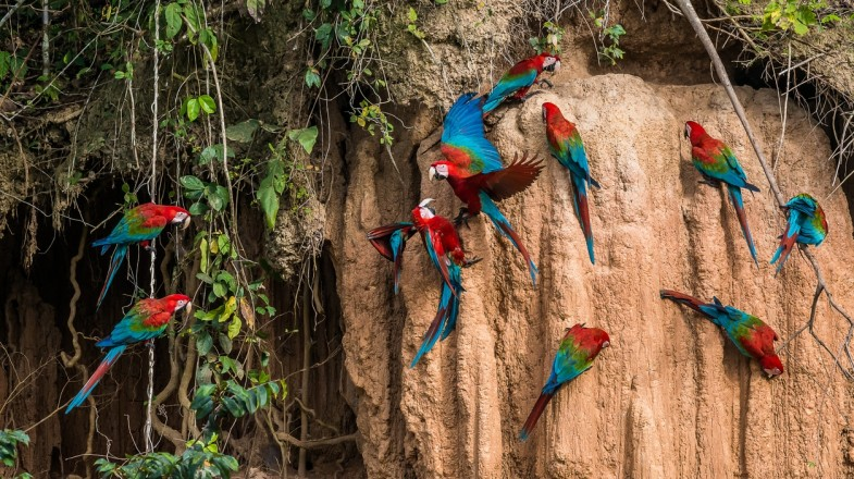 Tours and holidays to Puerto Maldonado will bring you close to macaws