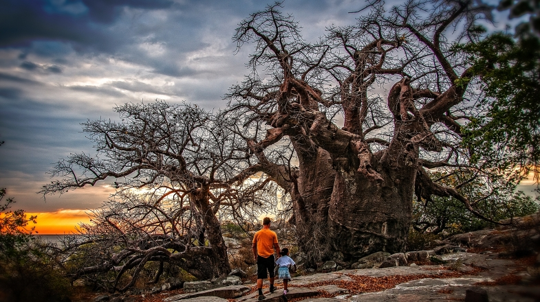 Mapungubwe National Park flaunts dramatic sandstone formations, woodlands, riverine forests and a range of different vegetation including the iconic baobab trees.