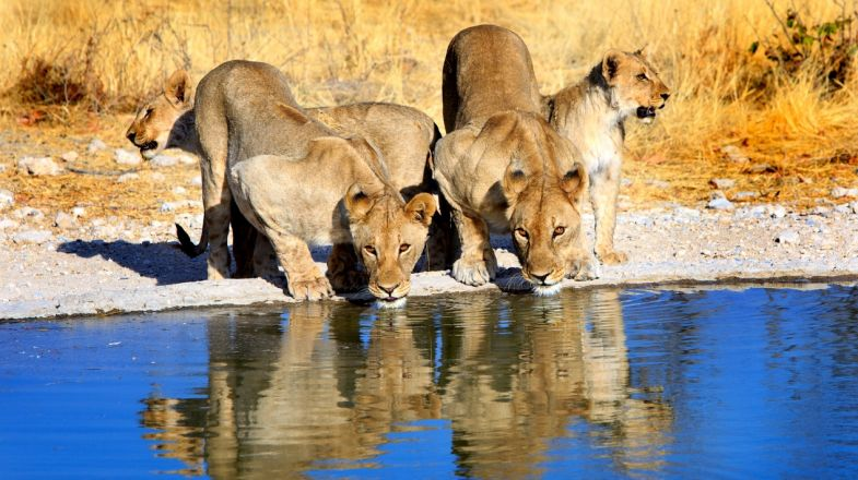 Holidays to Namibia requires a visit to the Etosha National Park