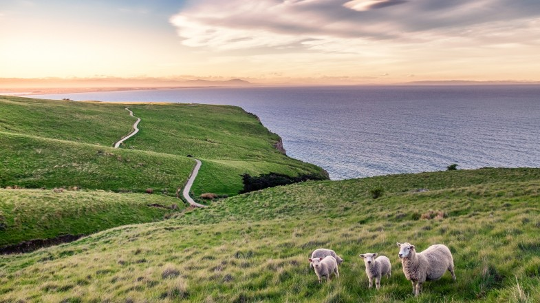 It is best to build a New Zealand itinerary if you plan to visit New Zealand so you don't miss out on the incredible scenery and vibrant cities of New Zealand.