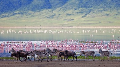 Zebras and wildebeest in Ngorongoro Crater