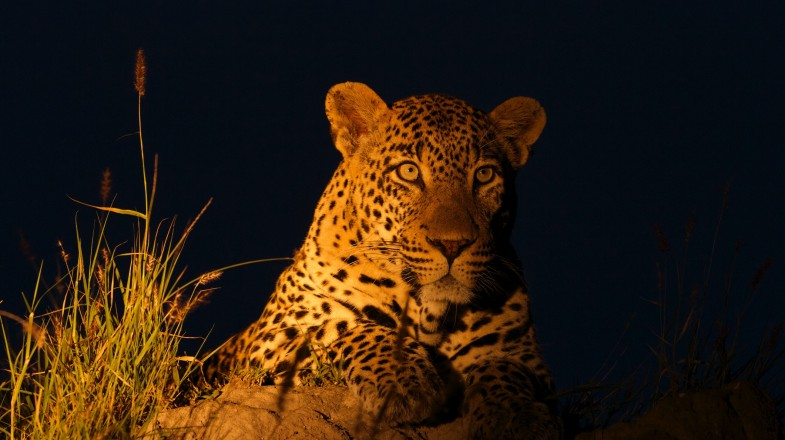 Game Reserves entertain night safari which can be a truly memorable experience and is the only way to see some of the nocturnal animals.